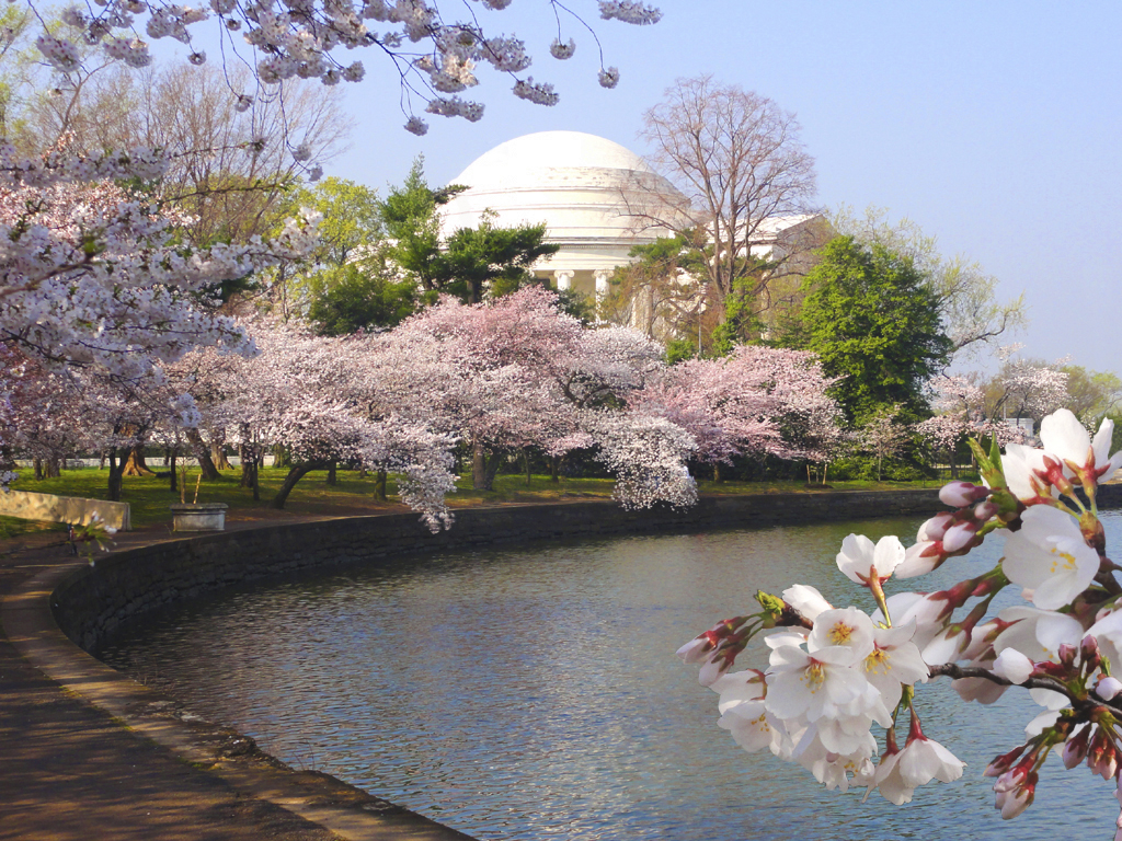 Photo of Cherry Blossoms along the Tidal Basin in Washington, DC